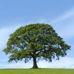 env-tree